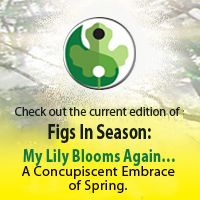 slider-FIS-Spring-16