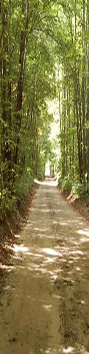 300x1200-trails